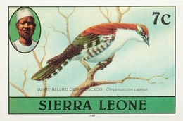 SIERRA LEONE 1980 Birds Didric Cuckoo 7c Imp.1982 Wmk CA IMPERF. - Oies