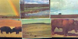 (fromage) « LA VACHE QUI RIT » - De La Collection « Grande Prairie » : Lot De 49 Chromos Différents - Trade Cards