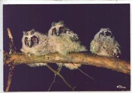 Hiboux Moyen Duc - Hibou Strigié Asio Otus (animaux De Montagne N°0224 Cp Vierge) - Birds