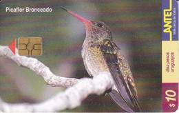 Nº 127 TARJETA DE URUGUAY DE UN PICAFLOR BRONCEADO  (BIRD-PAJARO)  (CHIP G5 ROJO) - Uruguay