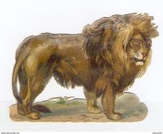 CHROMO DÉCOUPIS GAUFRÉ LION - LEON - LOWE - LEONE - Animaux