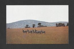 ANIMAUX - ANIMALS - ZÈBRES - EAST AFRICAN WILD LIFE ZEBRA - PAR SAPRA STUDIO - Zèbres