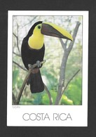 ANIMAUX - ANIMALS - OISEAUX - BIRDS - TUCAN RAMPHASTOS SWAINSONI - PHOTO PATRICIA AGUILAR - Oiseaux