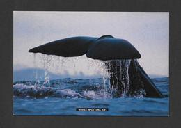 ANIMAUX - ANIMALS -  WHALE SPOTTING IN NEW ZEALAND - BALEINES - BY TIKI POSTCARD - Poissons Et Crustacés