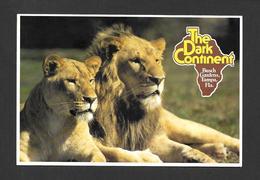 ANIMAUX - ANIMALS -  LION ET LIONNE - THE DARK CONTINENT BUSH GARDENS TAMPA FLORIDA SAFARI THROUGH THE SERENGETI PLAIN - Lions