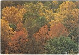 Fall Foliage - Shenandoah National Park - (Virginia, USA) - 1976 - USA Nationale Parken