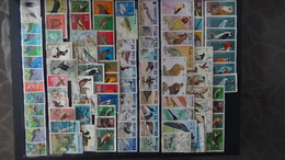 Belle Thématiques Sur Les Oiseaux . Plusieurs Dizaines De Timbres Et 33 Photos !!! - Briefmarken