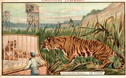 PUBLICITE Chocolat LOMBART Le Tigre Les GRandes Chasses   Advertisement Advertising. - Publicidad