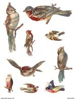 LOT DE 9 CHROMOS DÉCOUPIS OISEAUX - BIRDS - UCCELLI - PÁJAROS - AVES - Animals
