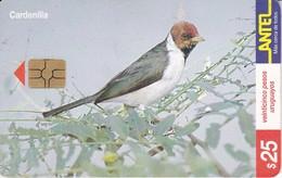 Nº 132 TARJETA DE URUGUAY DE ANTEL DE UNA CARDENILLA (PAJARO-BIRD) - Uruguay