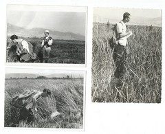 3 Photos.1956 Struga .Macedonia - Places