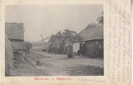 Westerlo - Westerloo - Berghoem - Zicht Op Windmolen - 1904 - Westerlo