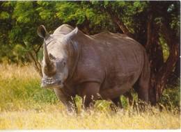 CPM - RHINOCEROS WHITE - SOUTHERN AFRICA - Edition A.P - Rhinocéros