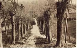 Bilsen Bilzen Borreberglaan 1921 - Bilzen