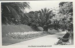 In The Botanical Gardens.  Wellington New Zealand  Picture  S-4620 - Fiches Illustrées