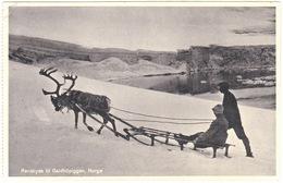 Renskyes Til Galdhøpiggen, Norge. Reindeer, Reinsdyr. Sledge, Sled. - Norway