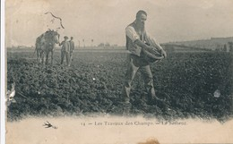 CPA - Les Travaux Des Champs - Le Semeur - Agriculture