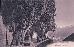 Brissago, Cipressi (2085) - TI Tessin