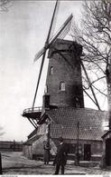 TIELT (W.Vl.) - Molen/moulin - Zeldzame Opname Van Molen Loncke Tijdens De Eerste Wereldoorlog (nu Nog Ingekorte Romp) - Tielt