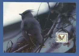Färöer Inseln   Mi.Nr. 298 , Seidenschwanz - Maximum Card - First Day Torshavn 15.4.96 - Faroe Islands