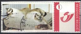 Belgique Oblitéré Sur Fragment Used Photo De Deux Chats Sur Une Chaise SU - Belgique