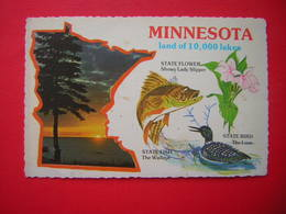 CPSM  ETATS UNIS MINNESOTA LAND OF 10,000 LAKES  STATE FLOWER STATE FISH STATE BIRD  VOYAGEE 1980 TIMBRE - Non Classés