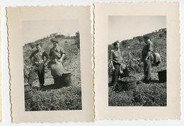 AGRICULTURE VIN VIGNE VENDANGES JARLOT RAMASSAGE RAISIN Lot 2 Photos Homme Man - Professions