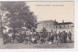 Gironde - Berson -(La Brède) - Les Vendanges - France
