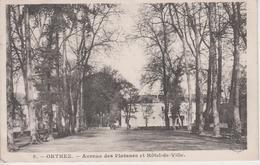 CPA Orthez - Avenue Des Platanes Et Hôtel De Ville - Orthez