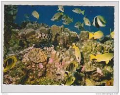 Carte Postale Polynésie Française BORA-BORA Nunue Jardin De Corail Coral Garden Très Beau Plan - Tahiti