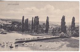 Moldova  Moldavie  Moldawien , Moldavia , Souvenir De Bessarabie ,  Basarabia , Postcard - Moldavie