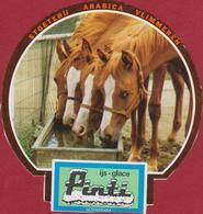 Sticker Autocollant Stoeterij Arabica Vlimmeren Kempen Horse Paard Cheval Pferd Aufkleber Adesivo - Autocollants
