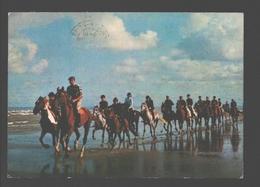 Belgische Kust - Paarden, Paardrijden - Horseback Riding - Belgique