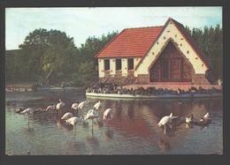 Adinkerke - Meli-Park - Flamingo's / Flamants Roses - 1959 - De Panne