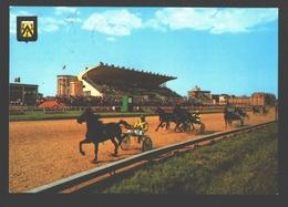 Oostende - Hippodroom Wellington - Paard / Horse / Cheval - Oostende