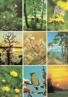Finnish Landscape - The Serie Of 7 Postcards - WWF Panda Logo - Flowers, Plants & Trees
