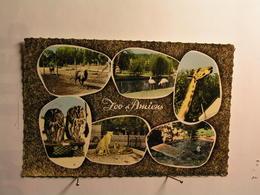 Amiens - Le Zoo - Girafe - Hiboux - Phoque - Guépards - Flamants - Chamois Et Biche - Amiens