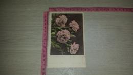 C-66714 FIORE FIORI ILLUSTRATA - Flowers, Plants & Trees