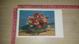 C-66715 FIORE FIORI ILLUSTRATA - Flowers, Plants & Trees