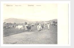 Campulung Roumanie Roumanie Kampulung Berceaux De Troupeaux De Vaches - Rumänien