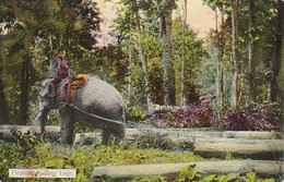 PC Rangoon - Elephant Hauling Logs (38849) - Myanmar (Burma)