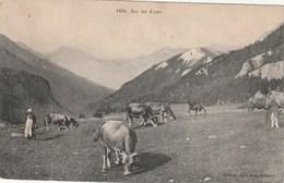 Carte Postale Ancienne - Montagne - Alpinisme  - Sur Les Alpes - Vaches - Vachère - éditeur Pittier : Annecy - Alpinisme