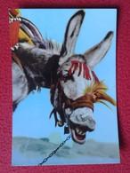 SPAIN TARJETA POSTAL CARTE POSTALE POST CARD BURRO ALEGRE DONKEY BURRITO ASNO SMILE SMILING ÂNE CON SONRISA OCHSE VER FO - Burros