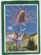 Le Chardon Bleu (panicaut Des Alpes) Eryngium Alpinum - La Flore De Montagne (cp Vierge) - Flowers
