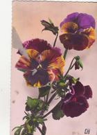 CP -  JOLIES PENSEES - Flowers