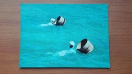 Ama (Seawoman) Picking Pearl-shell At Ise-Shima - Altri
