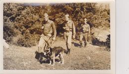 YUGOSLAVIA   --  BORDER UNITS WITH DOG - Militaria