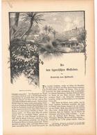 147 Liguria Ligurien Ligurische Gestaden 1 Artikel Mit 18 Bildern Von 1886 !! - Zeitungen & Zeitschriften