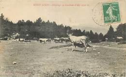 MONT LOUIS PATURAGE AU CAMBRAS D'AZE - Autres Communes