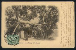 X05 - Egypt - PC Abbasia Cairo To France - 1907 - L'Arbre De La Vierge à Matarieh - Egypt